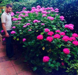 Lapo Bacci, giardiniere a Firenze. Si occupa di progettazione e realizzazione di giardini e spazi verdi a Firenze