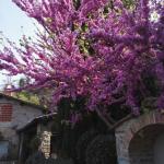 I giardini di Lapo di Lapo Bacci giardiniere a Firenze e Prato10
