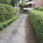 I giardini di Lapo di Lapo Bacci giardiniere a Firenze e Prato12