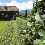 I giardini di Lapo di Lapo Bacci giardiniere a Firenze e Prato3