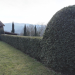 I giardini di Lapo di Lapo Bacci giardiniere a Firenze e Prato9