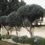 manutenzione alberi a Firenze