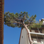 abbattimento alberi a Firenze