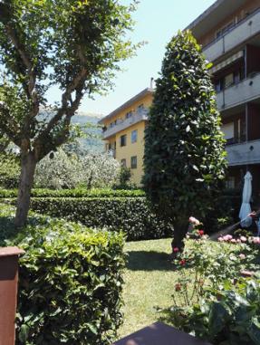 I Giardini di Lapo si occupa di potatura alberi e piante a Firenze, abbattimento alberi, potatura alberi alto fusto, potatura alberi da frutta. Potature alberi periodiche o straordinarie.