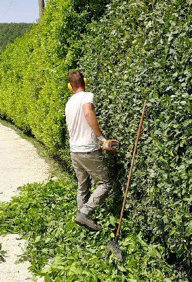Lapo Bacci è giardiniere professionista a Firenze, disponibile per sopralluoghi al vostro domicilio