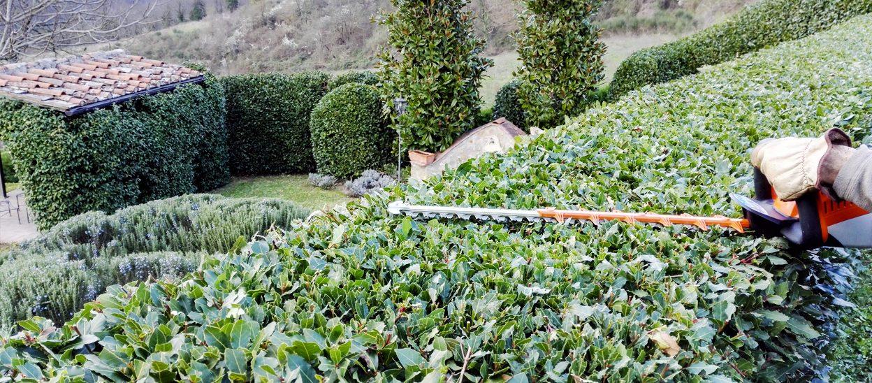 Giardiniere a Firenze: Lapo Bacci si occupa di occupa di progettazione e realizzazione di giardini e spazi verdi, manutenzione di aree verdi e terrazzi, impianti di irrigazione, potatura ed abbattimento alberi.