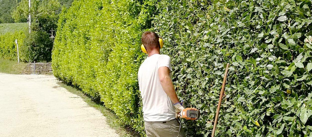 Giardiniere a Firenze, Lapo Bacci si occupa di progettazione spazi verdi, manutenzione giardini, realizzazione impianti di irrigazione e molto altro.