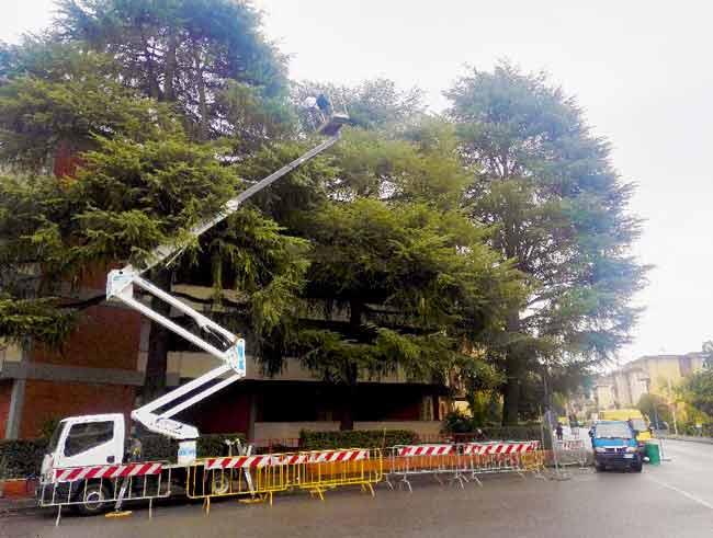 Lapo Bacci si occupa inoltre dell'abbattimento di alberi e piante ad alto fusto, sia in aree private che in aree pubbliche.